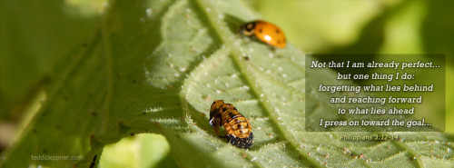Facebook cover photo: ladybug hatched