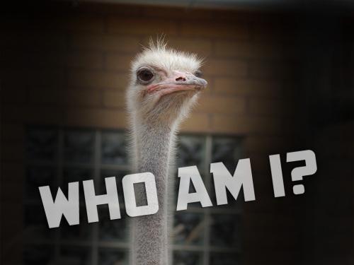 ostrich-iowaDSCN1429words