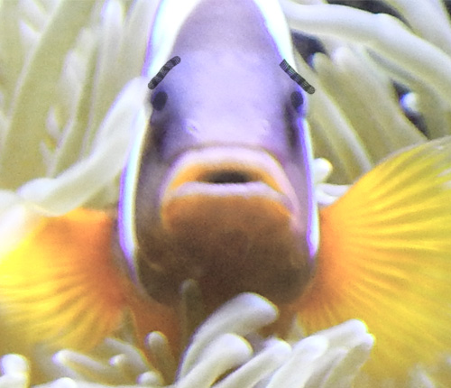 Worried fish
