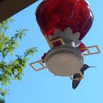 Hummingbird lookout