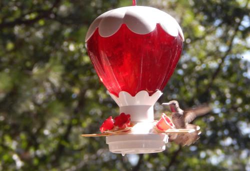 Hummingbird flying up to feeder
